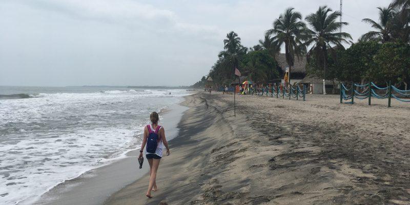 Palomino // Colombia