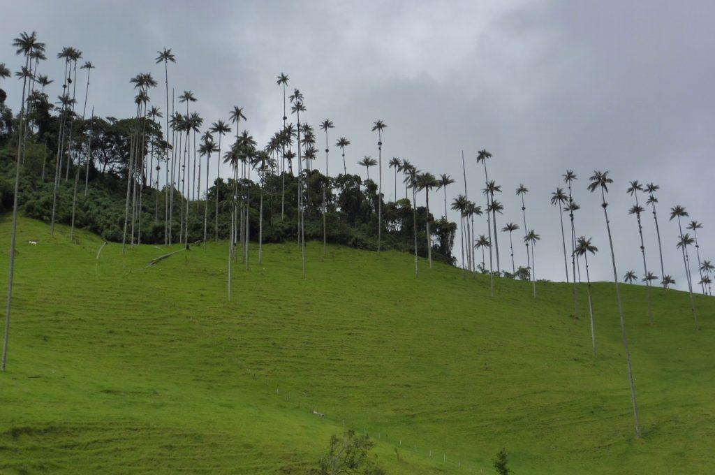 Colombia Salento Valle de Cocora
